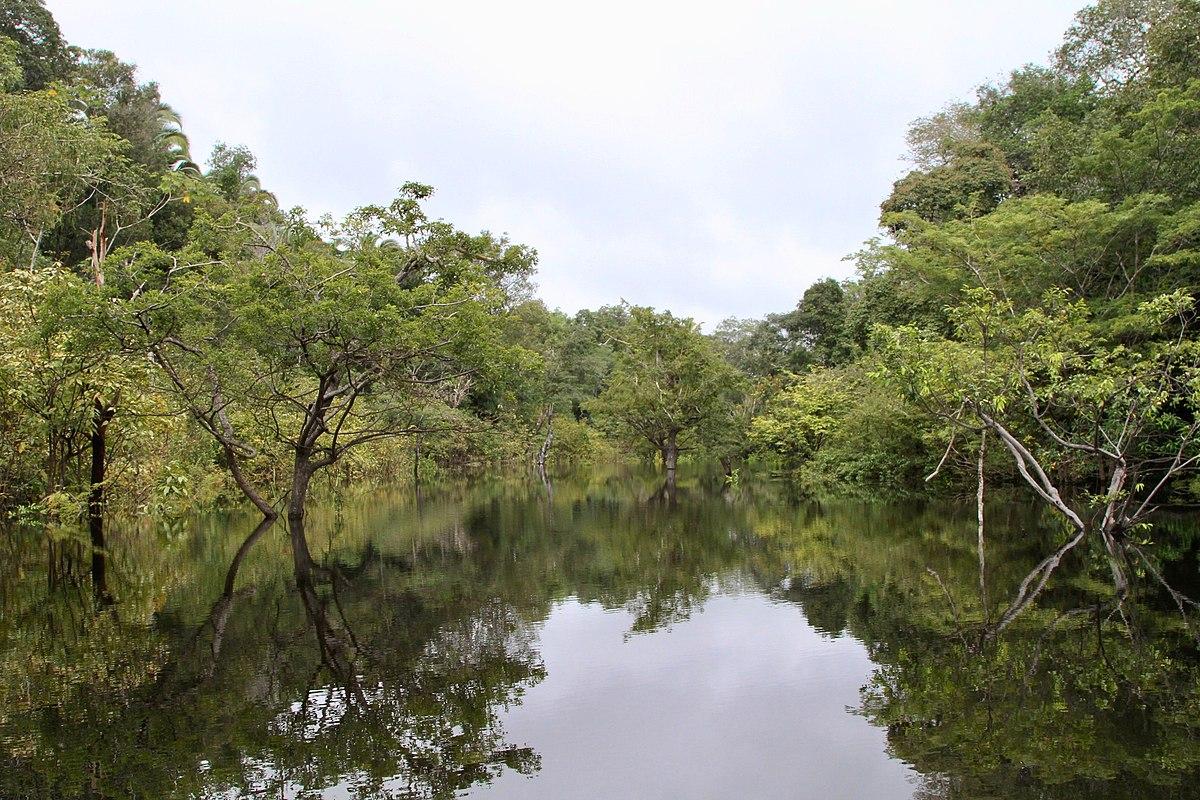 Vedci objavili v Amazonskom pralese vzácne druhy húb, môžu byť dôležité pre zachovanie biodiverzity