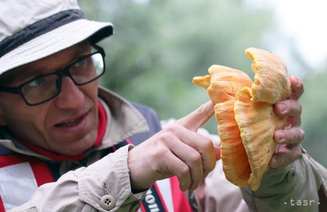VIDEO: Liečivé huby rastú i na Slovensku, na liečbu ich využívame málo