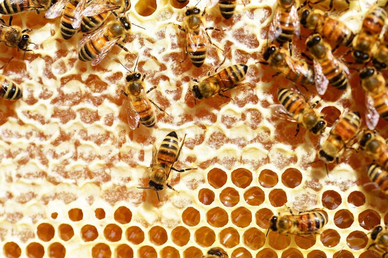 Včelie probiotikum, ktoré väčšina Slovákov nepozná. Trúdie mlieko je životabudičom potencie