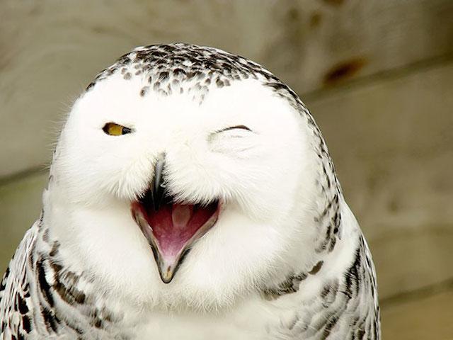 Pozrite si fotky 30-tich najšťastnejších zvierat na svete