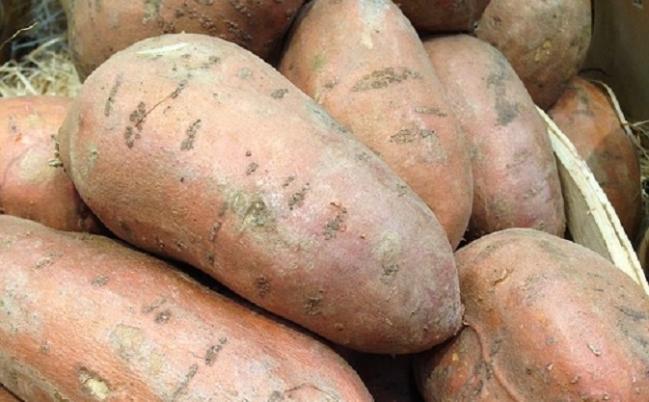 Čo by ste mali vedieť o sladkých zemiakoch