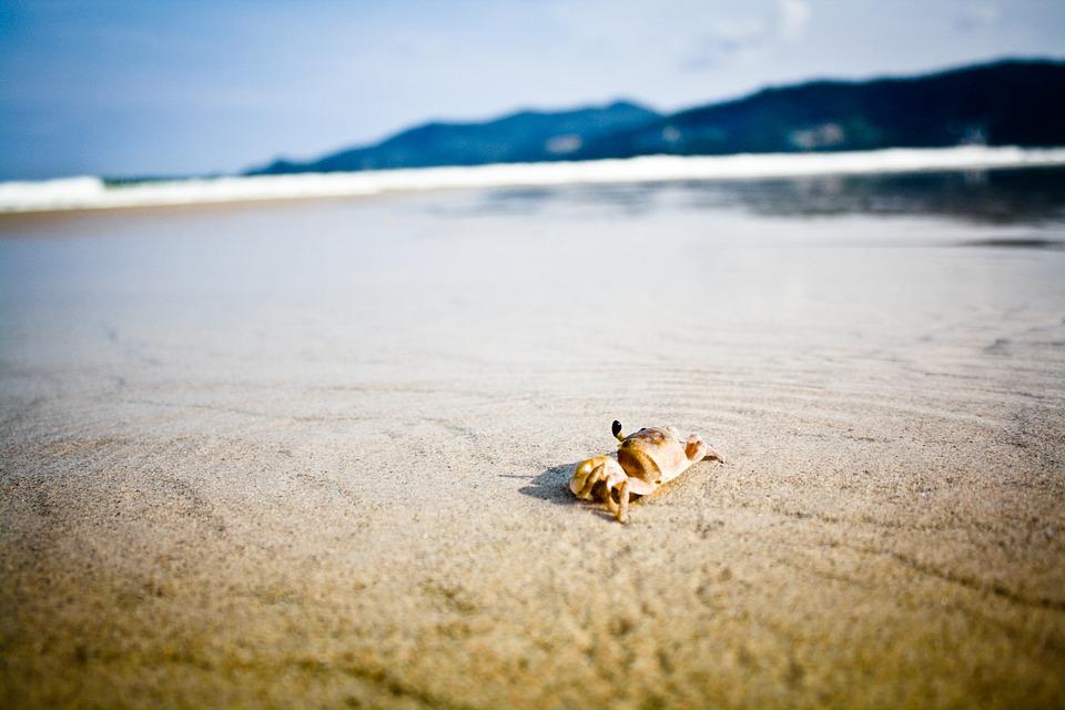 Panciere krabov sa rozpúšťajú, spôsobuje to čoraz kyslejšia voda Tichého oceána