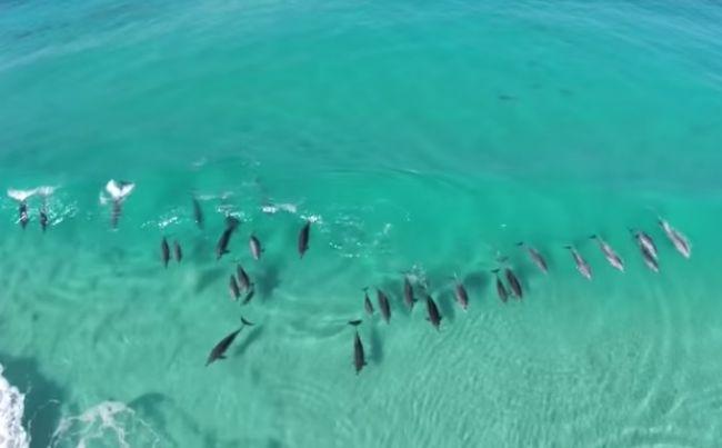 Aj delfíny dokážu surfovať