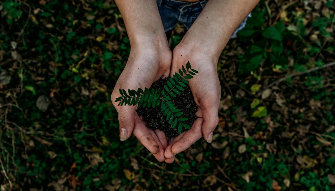 Prečo je ekológia dôležitá a ako môžete našej planéte pomôcť aj vy?