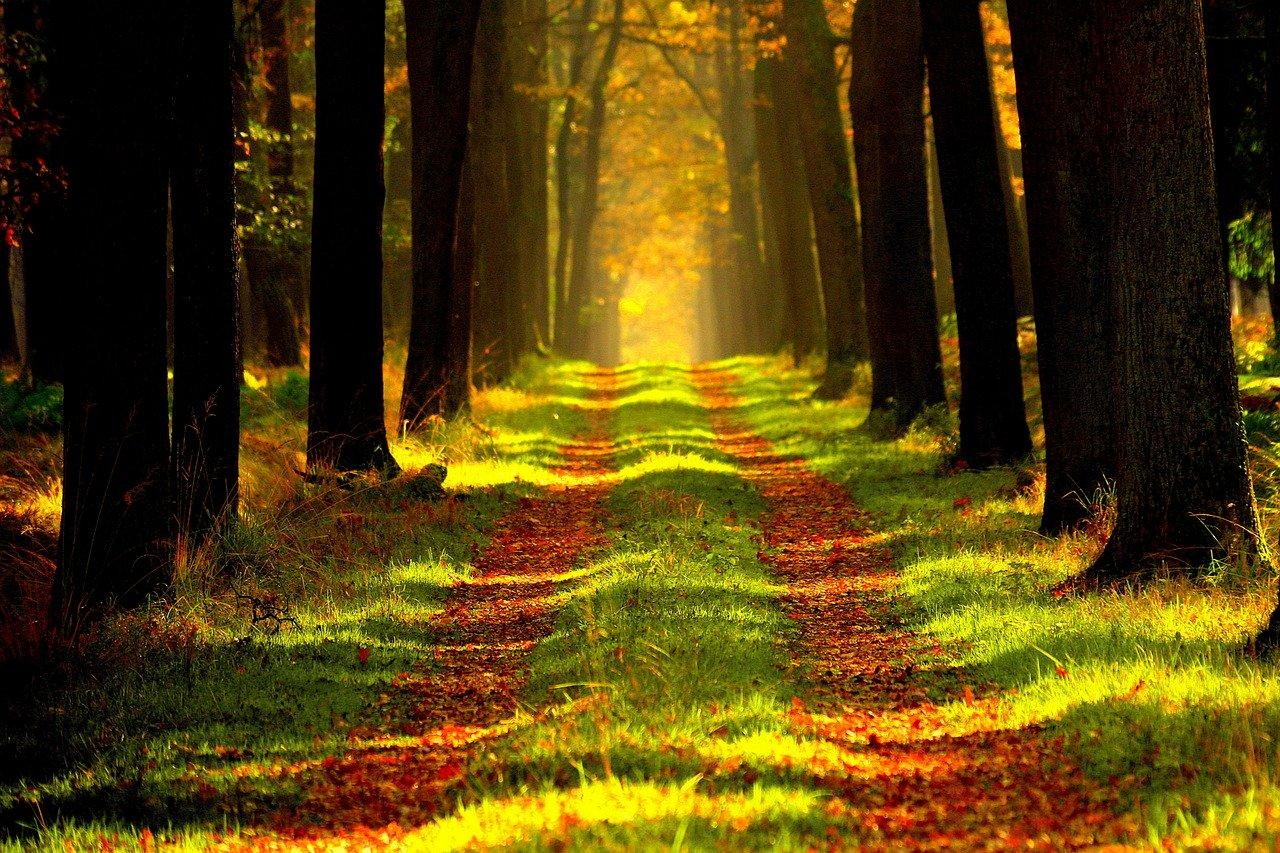 Štátny podnik Lesy zmení starostlivosť o prímestské lesy Bratislavy, posilní ich rekreačnú funkciu
