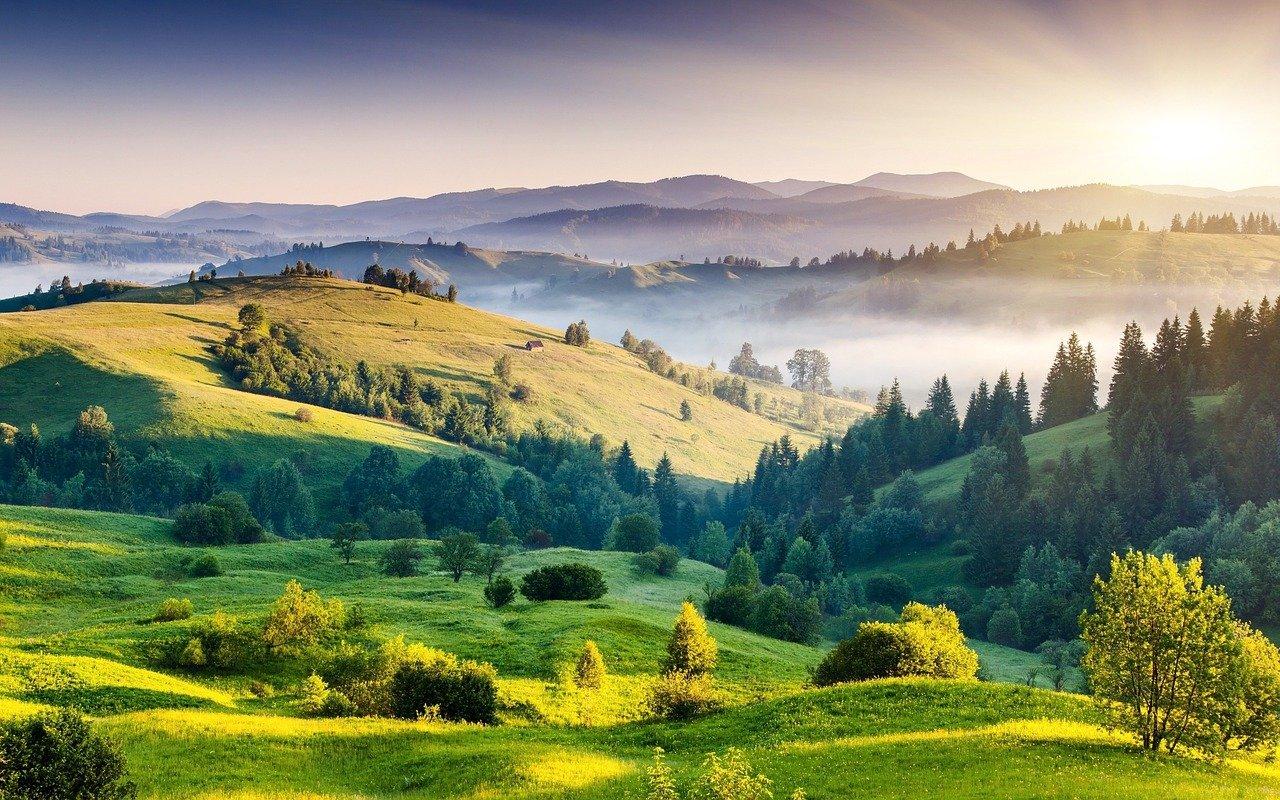 Ihličnany na Slovensku enormne ubúdajú, podľa vedcov za tým stojí niekoľko faktorov