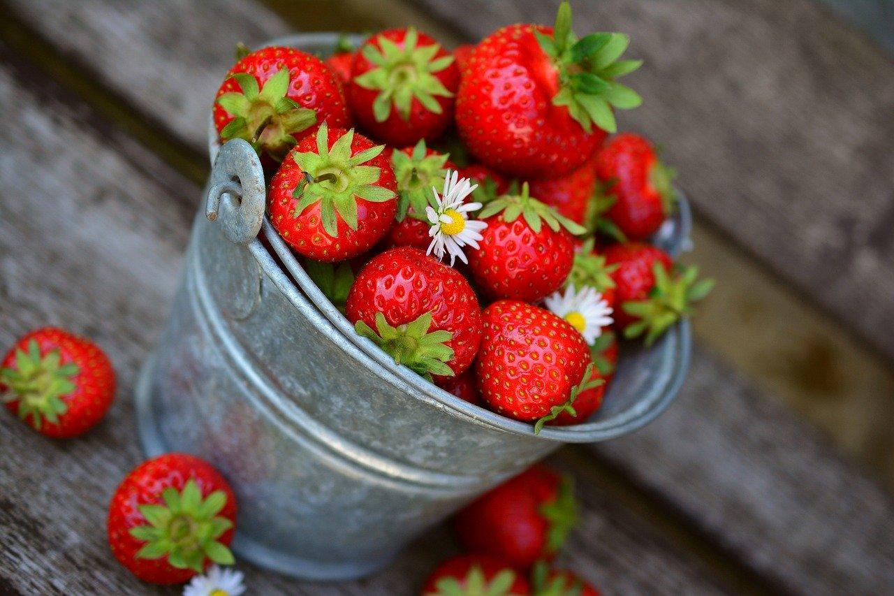 Jahody si môžu tento rok ľudia sami nazbierať na 23 jahodoviskách. Kde všade sa dá zbierať?