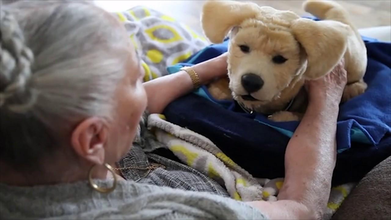 Robotický pes pomáha pacientom s demenciou, firma už pracuje aj na vývoji robotických mačiek