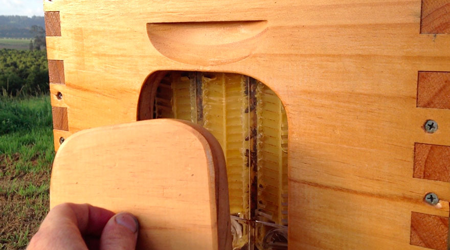 Šikovný vynález: zbiera med priamo do fľiaš a nevyrušuje pri tom včely