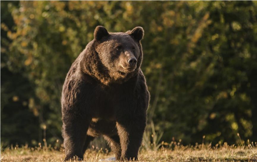 Okolo Hrebienka sa túla medvedica, odborníci varujú pred kŕmením
