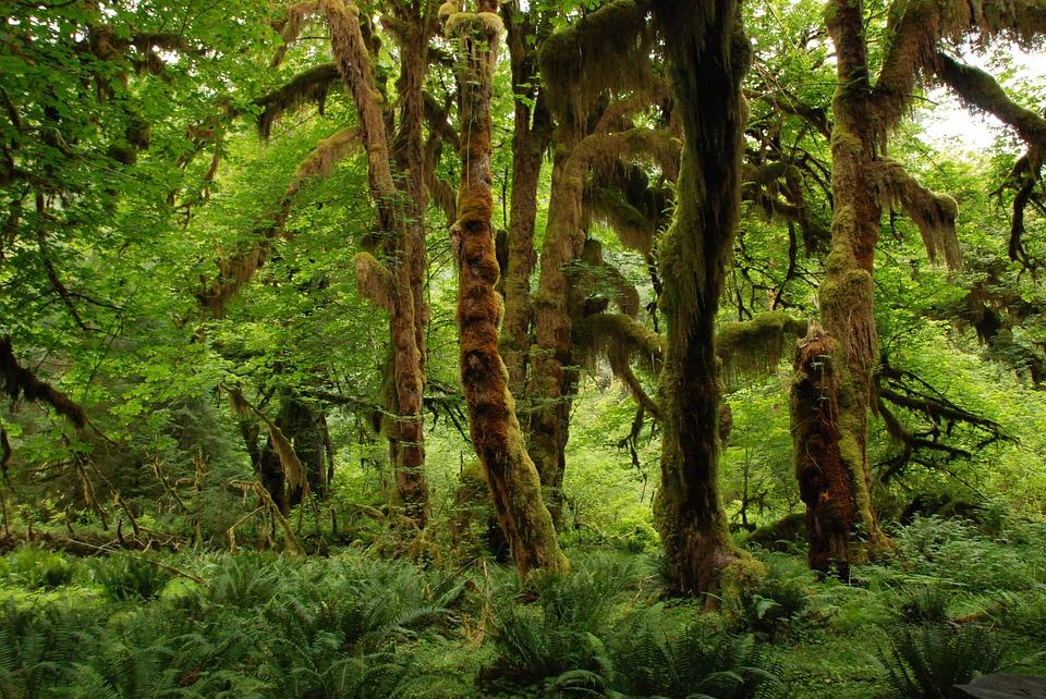 Odlesňovanie v Amazonskom pralese stále narastá, podľa kritikov za môže aj prezident