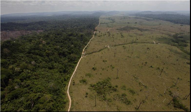 Odlesňovanie v Amazónii dosiahlo v júni nový rekord