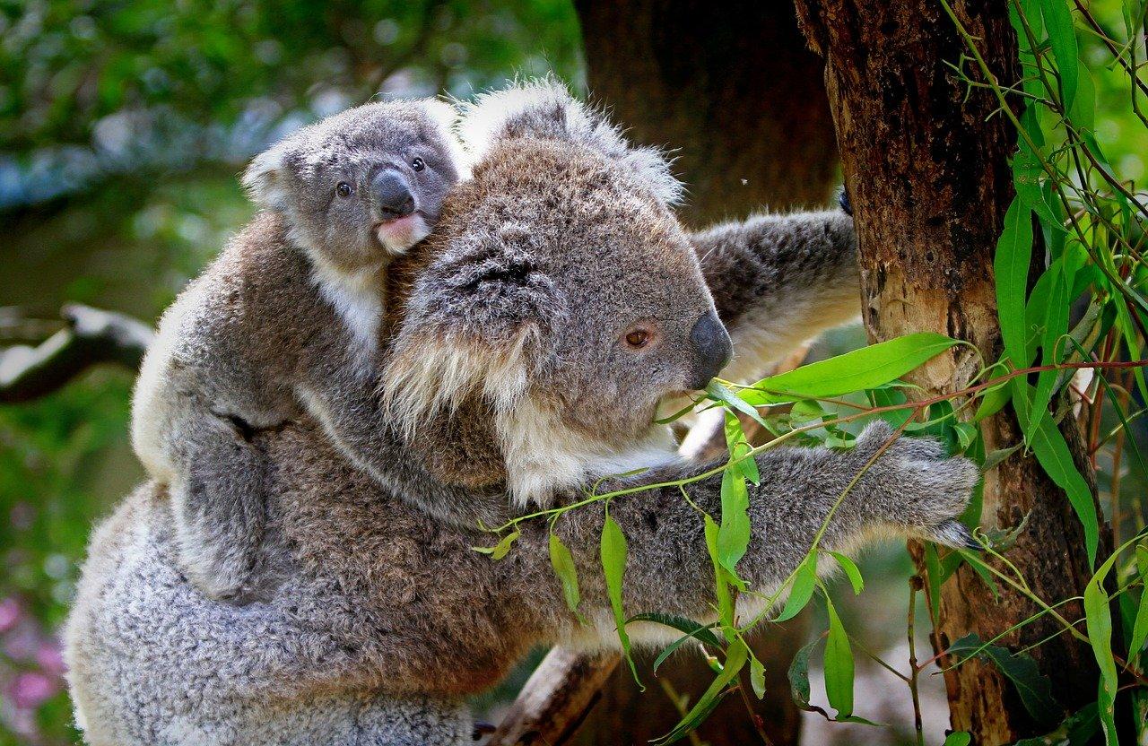 Ľudia nepoznajú viac ako 85% živočíchov. Nová mapa ukazuje, aké a kde ich môžeme hľadať