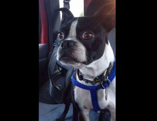 Vtipné video: Tento pes dokáže imitovať zvieratá!