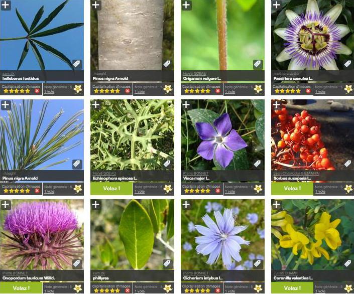 Nová aplikácia Pl@ntNet pomôže určiť druhy rastlín vo voľnej prírode