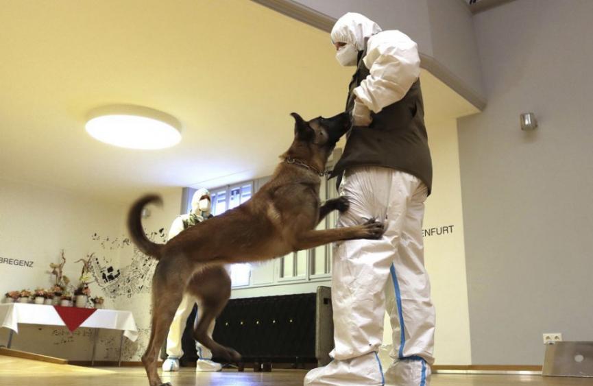 Rakúska armáda robí výcvik psov, ktoré dokážu odhaliť koronavírus