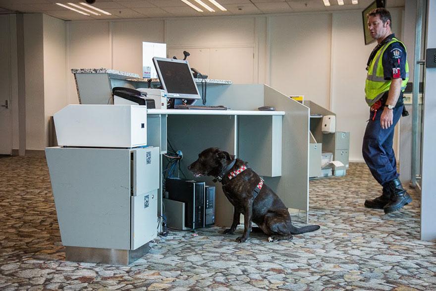 Vyhľadávacie psy po prírodných katastrofách