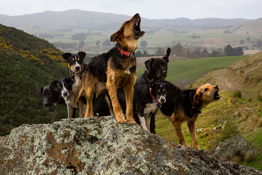 Doprovodné psy
