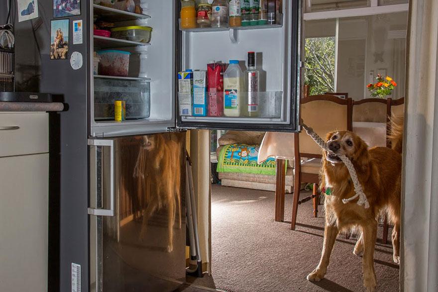 Asistenčné psy pre epylepsii