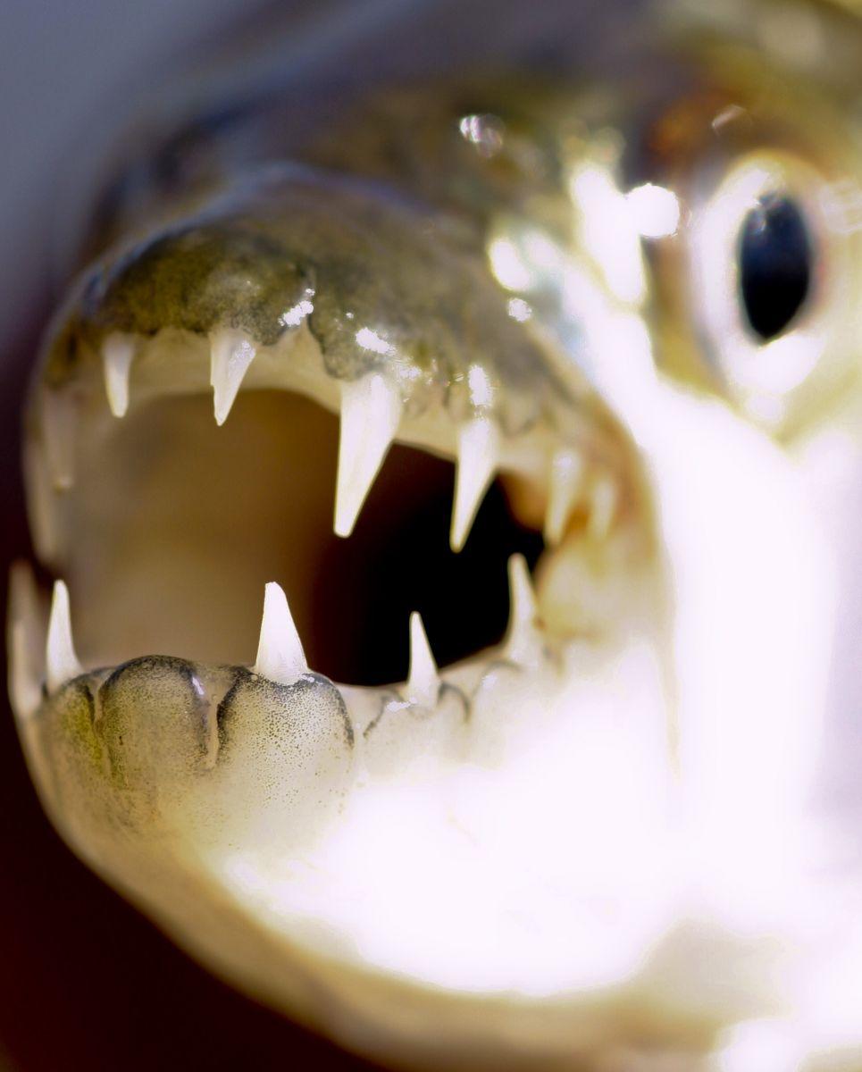 Zoo Bojnice chová jednu z najnebezpečnejších rýb sveta