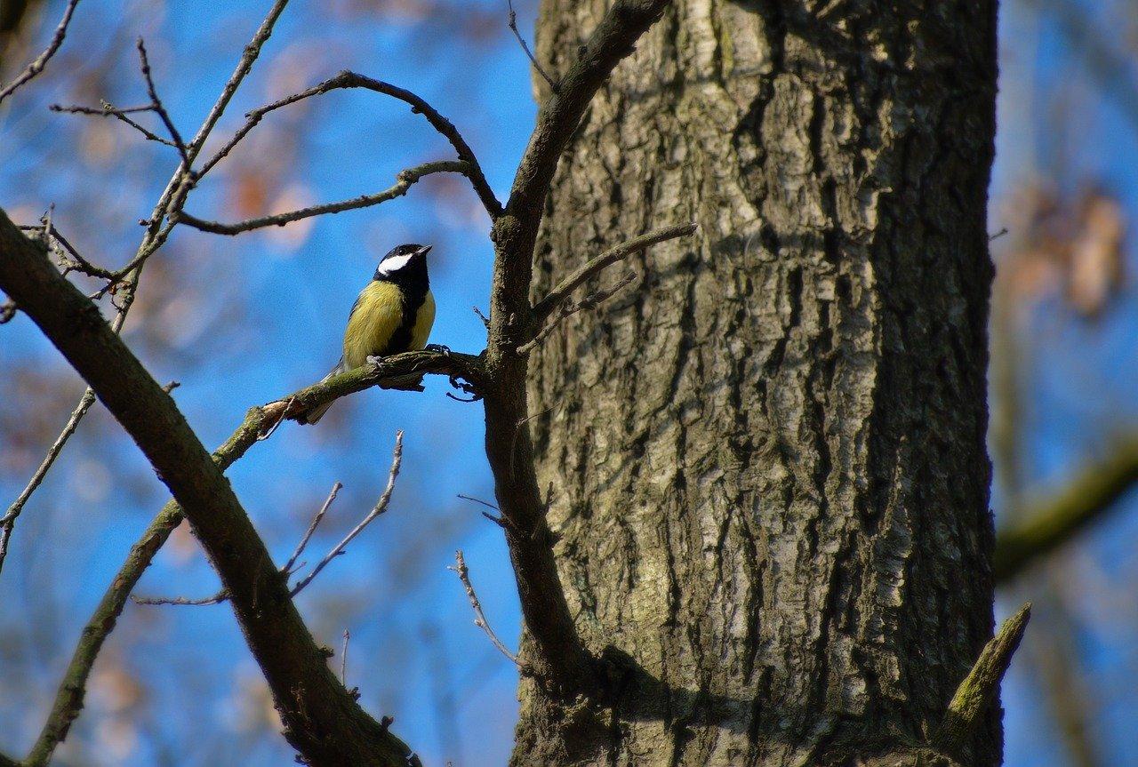 Štátnu pôdu v chránených územiach nespravuje jedna inštitúcia, v tom vidia ornitológovia základný problém ochranárstva