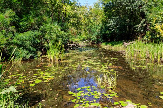 Program starostlivosti a rozširovanie sústavy NATURA 2000 pomáha zachovať mokrade na Slovensku