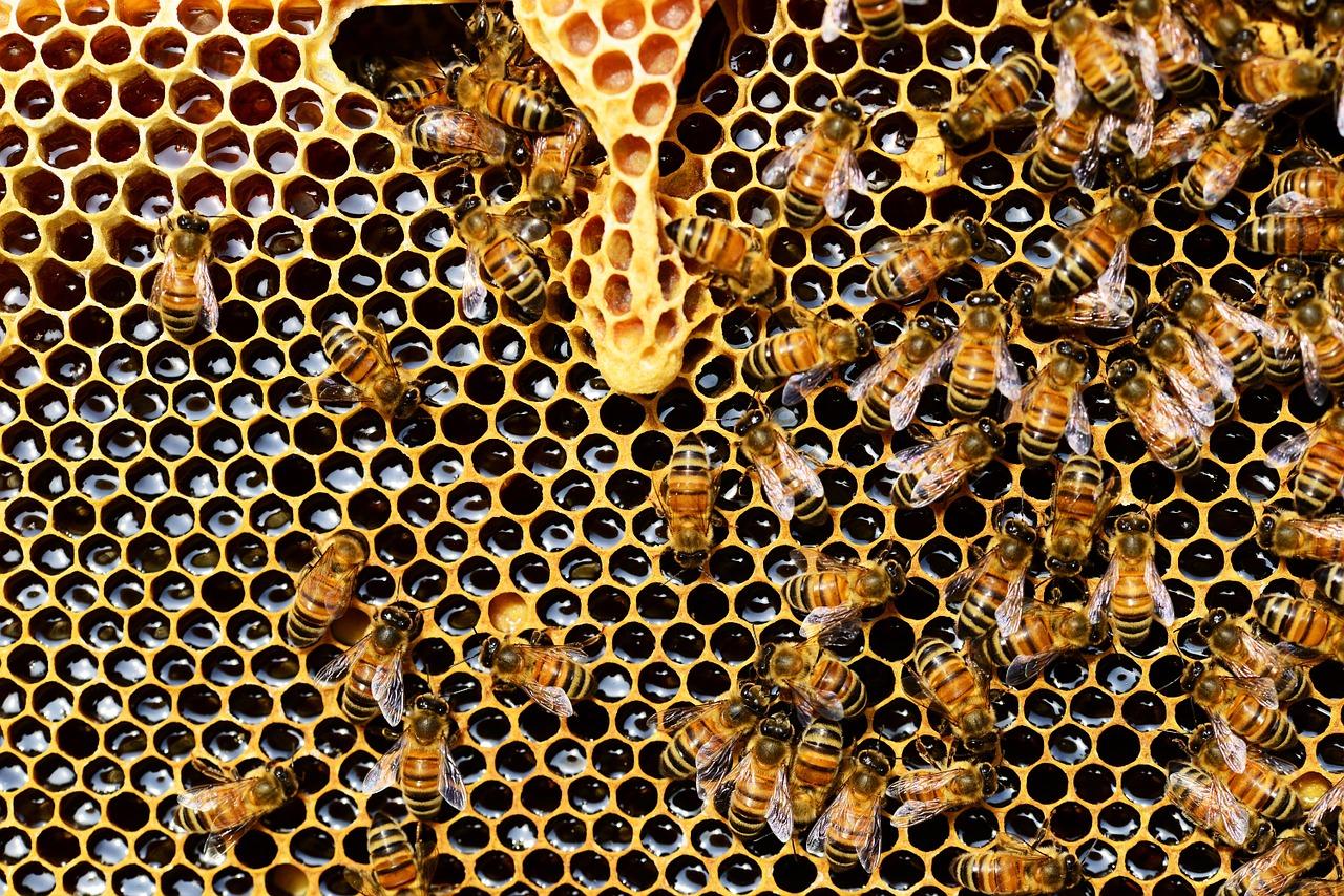 Najinteligentnejší hmyz má v tele pozoruhodnú látku. Vedci hovoria o sľubnom lieku na rakovinu