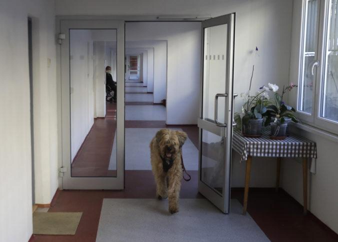 V Česku otvárajú psie salóny, hodinárstva aj povolia svadby do 10 ľudí. Začínajú s prvou fázou uvoľnovania obmedzení