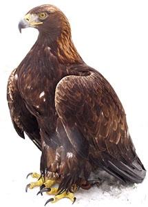 Vyhynutie hrozí na svete až 1 226 druhom vtákov