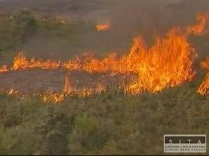 Lesné požiare súvisia s klimatickými zmenami, tvrdí morgan