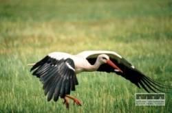 Rapperi s veľkými vtáky